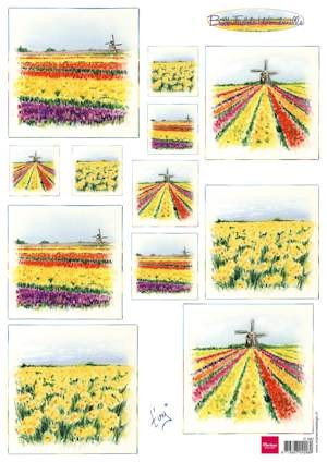 knipvel bulb fields Holland IT582
